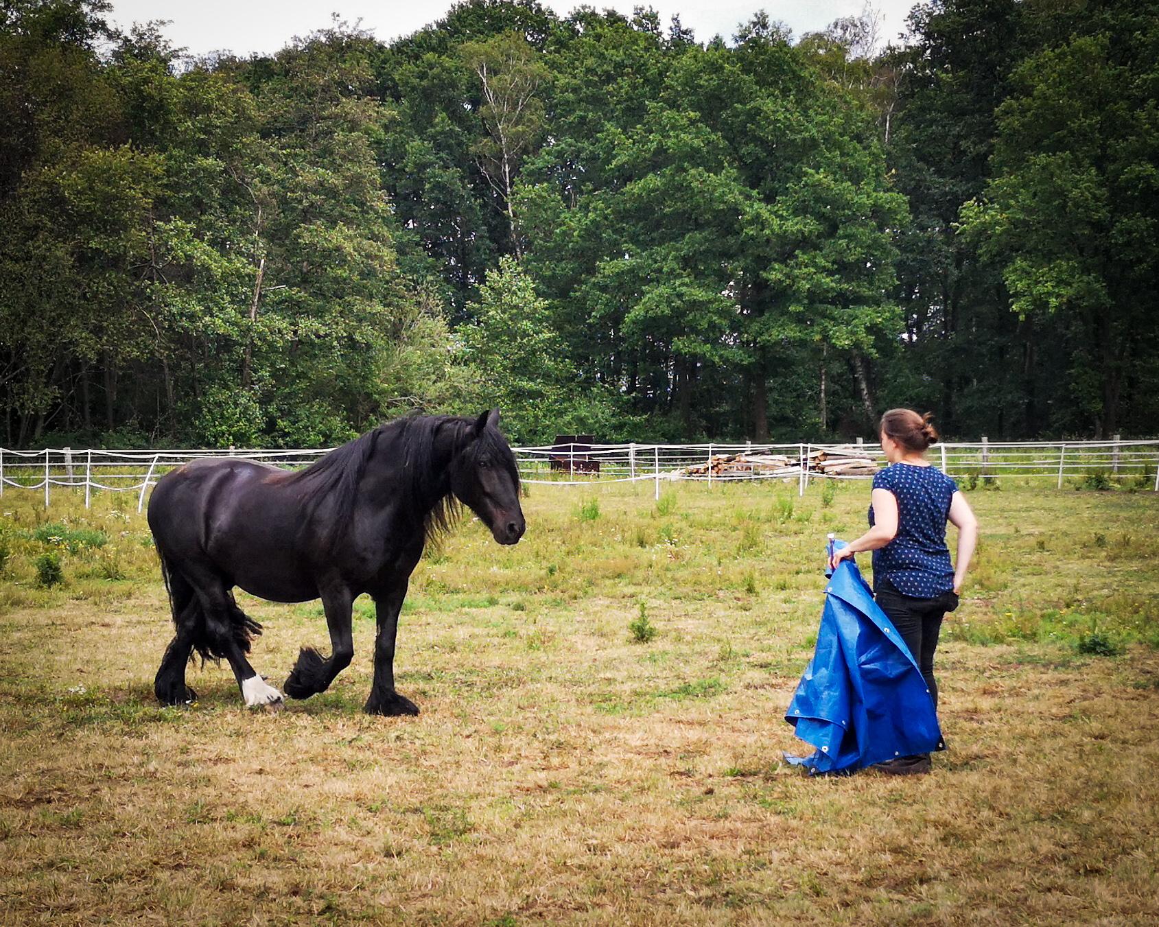 Über den konventionellen und den friedvollen Weg mit Pferden