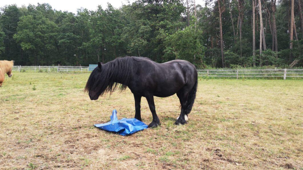 Was schreckhafte Pferde wirklich brauchen